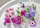 Kräftige Winterblüher, ideale Zimmerpflanzen
