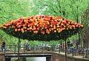 Neues Buch von Blooms mit mehr als 500 Abbildungen