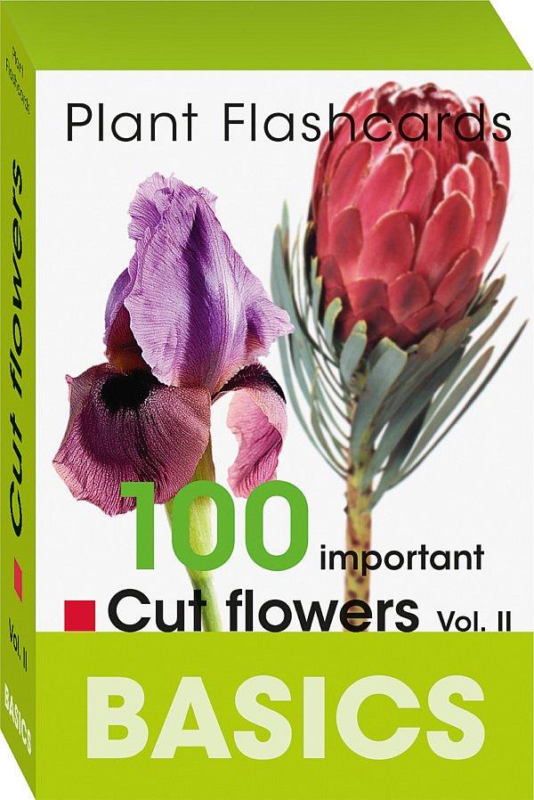 Plant Flashcards cut flowers schnittblumen Bloom's Fleur Kreativ Fleur Magazine florist Fakten Lernkartenbox Karte botanischen Namen lernen Informationen