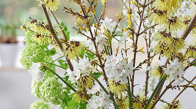 Frühling Kreation Blumen Blütenzweige Vase Blumenstrauß Winter Januar Fleur Kreativ