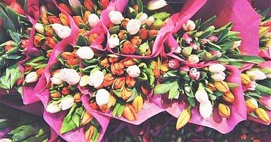 Frühjahrserwachen farbenfrohe Tulpen