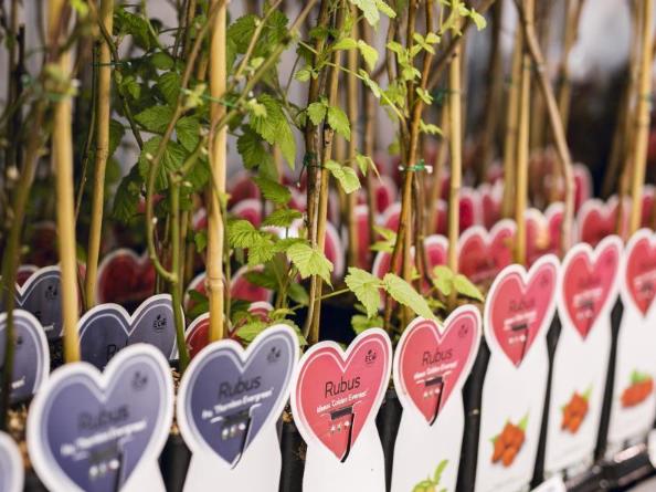 Flora Garten Veranstaltung floristik Blumen Pflanzen Haus Garten Inspiration besuchen event agenda Kalender Fleur Kreativ