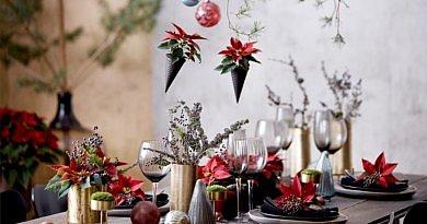 Weihnachtsstern Poinsettien dekoration Weihnachten Christmas Inspiration Blumen Pflanzen Fleur Kreativ Magazin Zeitschrift DIY selber machen tipps tricks blumendesign blumenkunst stilrichtungen raumgestaltung natürliche materialien