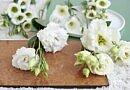 7 Blumen, die wir im Winter lieben