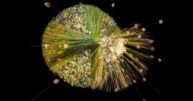 fleur kreativ magazin zeitschrift blumen blumenkunst floristik floristen blumendesign floral art grossartige blumendekorationen inspiration floral artist blumenliebhaber diy