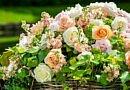 Gartenkorb voller leuchtender Rosen