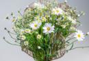 Fröhliche Frühlingskreation mit Margeriten