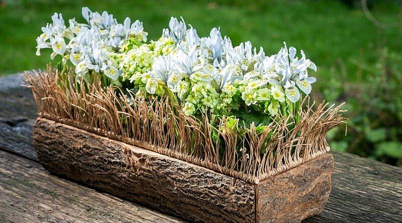 Heute erklärt unsere FLEUR Floristin Moniek Vanden Berghe, wie man dieses schöne Blumendesign mit Zwergiris und Schlüsselblume macht. Machen Sie es selbst!