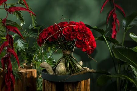 Fleur Kreativ: Entdecken Sie die Schönheit des neuen Red Tacazzi+ von Dümmen Orange.